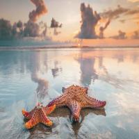 ستاره دریایی حجمی بزرگ