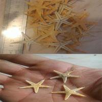 ستاره دریایی ریز
