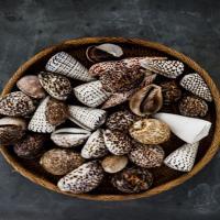 انواع صدف و گوش ماهی