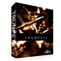 خرید اینترتی وی اس تی گروهی نوازی ترومپت Auddict Master Brass Trumpets