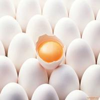 تخم مرغ زرده طلایی (فله)