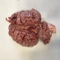 مغز گوساله عددی
