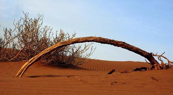 کویر ابوغویر