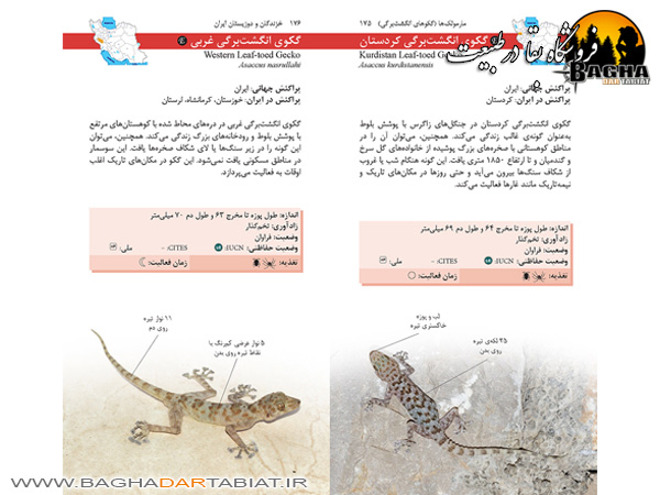 کتاب راهنمای میدانی خزندگان و دوزیستان ایران