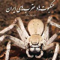 عنکبوت ها و عقرب های ایران