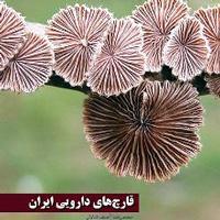 قارچهای دارویی ایران
