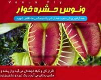 خرید پستی گیاه حشره خوار یا گیاه مگس خوار یا گیاه گوشت خوار