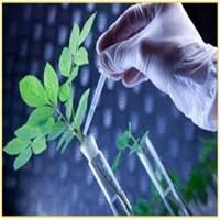 روش های زیست شناسی مولکولی مؤثر در بهبود فرایند پاکسازی زیستی