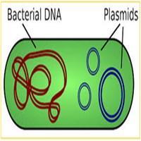 پلاسمیدDNA