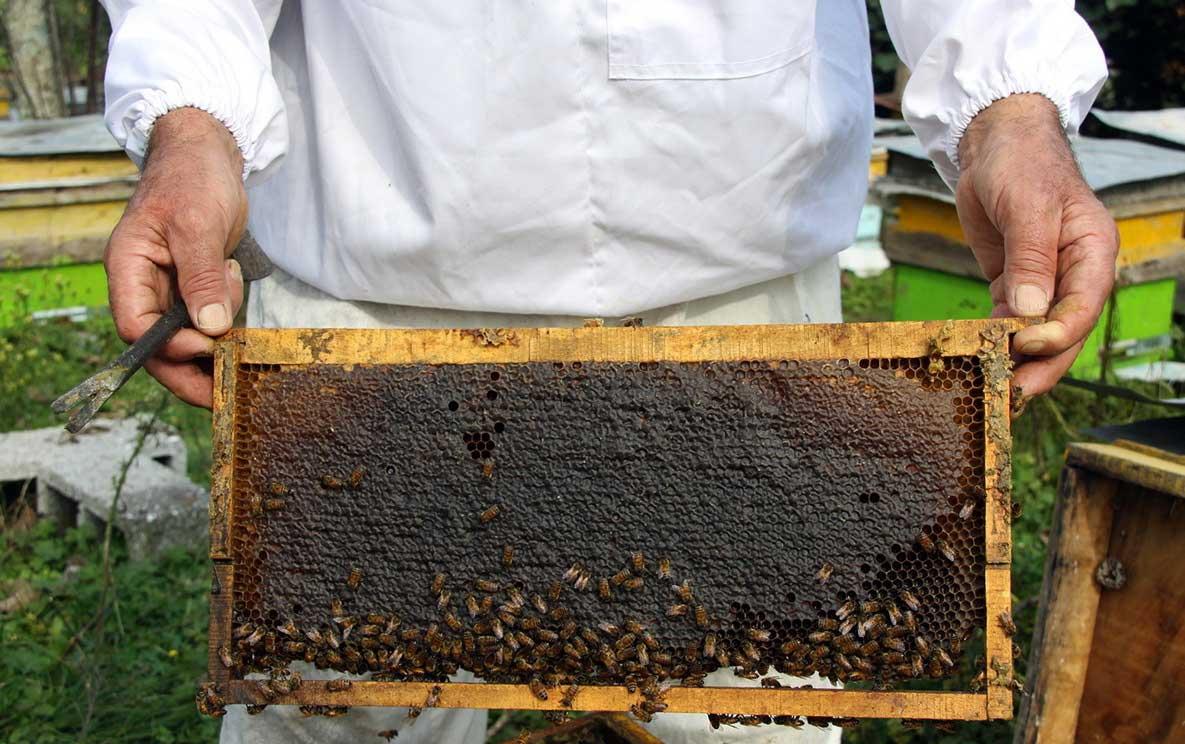 عسل موم دار 900 گرمی