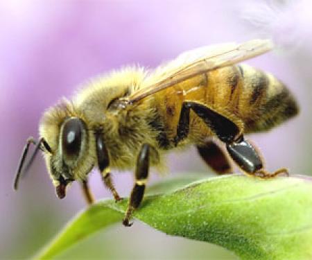 راهنمای کامل پرورش و نگهداری زنبور عسل
