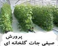 راهنمای جامع پرورش صیفیجات گلخانه ای