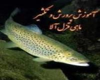 راهنمای پرورش و تکثیر ماهی قزل آلا