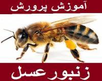 بسته آموزشی نگهداری زنبور عسل