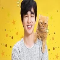 سریال کره ای گربه خیالی