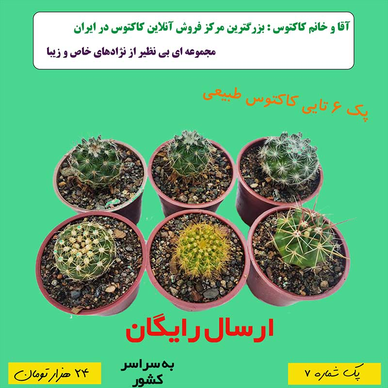 http://d20.ir/14/Images/688/Large/cactus07.jpg