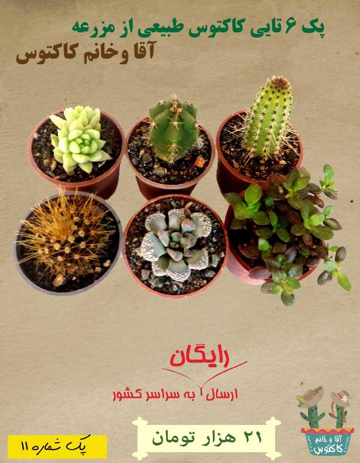 http://d20.ir/14/Images/688/Large/cactus115a420eba44f3d.jpg