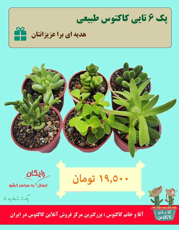 http://d20.ir/14/Images/688/Large/cactus8.jpg