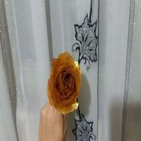 گل رز طلایی